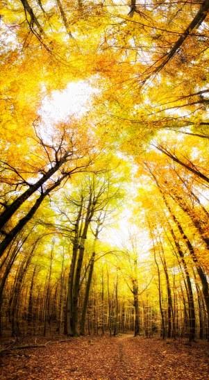 Herbst im NŸrnberger Staatsforst