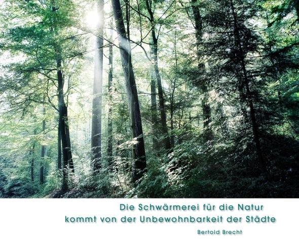 Der Michelsrombacher Wald