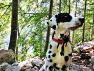 Tara im Wald