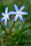 Frühling_112