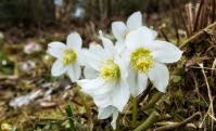 fröhliche Frühlingsblumen