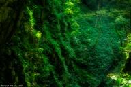 #schmoeesfotowalk - SocaTal - im Wald beim Kozjak Wasserfall